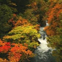 ホテル周辺秋の景色