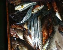 食材(色々なお魚)