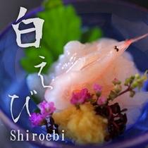 【白えび膳:向附 白海老お造り】「富山湾の宝石」白海老のとろりとした甘みとプリプリ感をご堪能。