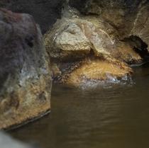温泉湧き口イメージ