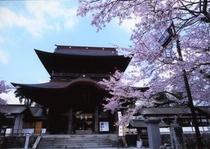 阿蘇神社のさくら2