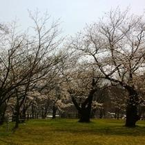 輪島のお花見スポット鳳来山公園は当館徒歩1分