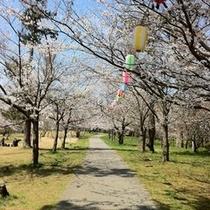 輪島のお花見スポット一本松公園