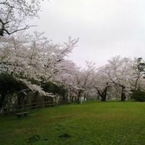 鳳来山公園の桜