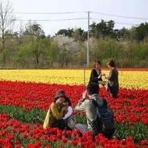 *【春】きっと思い出の一枚が撮れます