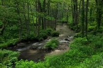 近くを流れる長瀬川