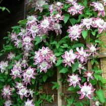 エミナース・ガーデンには、ハーブ、ミニ野菜畑、四季を通じて季節の花々が楽しめます