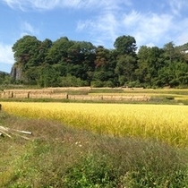 【お米】たまらなく美味しい★自家製天日干しの新米の収穫