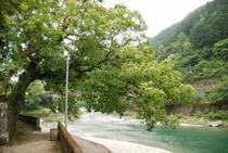 仁淀川町土居地区 土居川はとてもキレイ