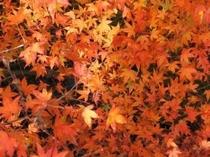 安居渓谷の秋画像8