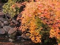 安居渓谷の秋画像2