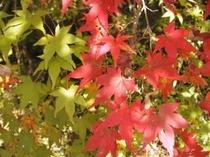 安居渓谷の秋画像1