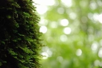 美しき鳥形山の植物たち 素晴らしい自然に会いに来ませんか