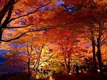 夕焼の渚・紅葉祭り