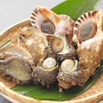 紀北では貝も色んな種類が捕れます