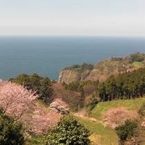 春の眺め1