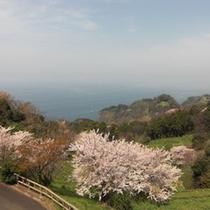 春の眺め2