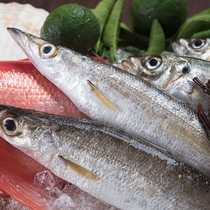 *近海で獲れた新鮮な魚介類をお楽しみください。