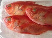 稲取漁港で捕れたて金目鯛を仕入れ、主人が調理します