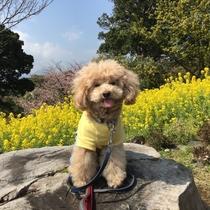海と花まみれ【ペーペーくん@伊豆四季の花公園】