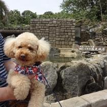 ボクもマーフィの温泉でデトックスしてきたよ【くうくん@シャボテン公園カピパラ露天風呂】
