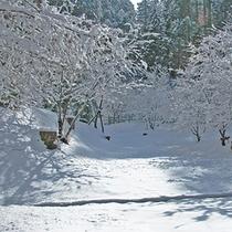 【雪】裏庭