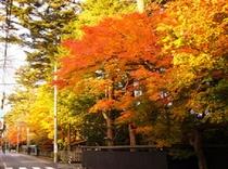 【秋】武家屋敷ホテル前 田町