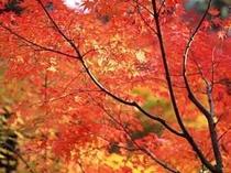 色鮮やかな紅葉