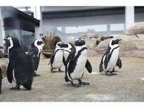 京都水族館(かわいいペンギンたち)