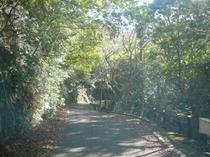 緑のトンネルと木漏れ日(癒しの空間)