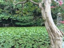 【渉成園(枳殻邸)】ホテルから徒歩20分で行ける、東本願寺の飛地境内地(別邸)。