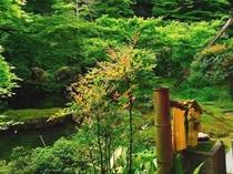 【少し足を伸ばして】新緑の季節はモリアオガエルの合唱が聞こえる、岩倉の実相院。