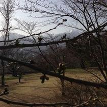 山岳博物館と桜