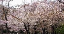 円山公園〜ホテルより地下鉄・徒歩20分