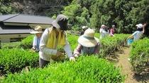 茶摘み体験宿泊