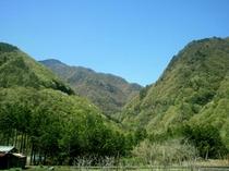 春の早川「新緑の森」