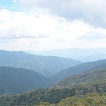 原生林からの眺め