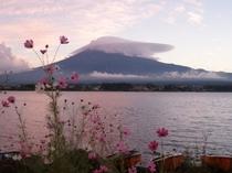 戸沢センターからの富士山と河口湖とコスモス
