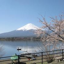 春の富士山と河口湖