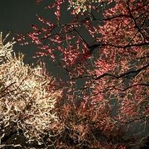 偕楽園(夜梅まつり)
