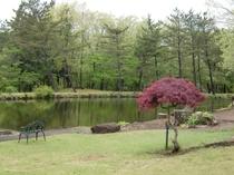 新緑が美しい映山湖