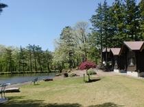 新緑の映山湖ガーデンにたたずむ離れログハウス客室