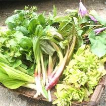 *【山菜】地元で採れる豊富な山菜を、それぞれにあった方法で調理いたします。