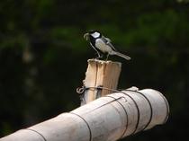 *【野鳥】自然に囲まれた当館には、周辺で様々な野鳥を見ることができます。