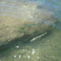 *[周辺施設(釣堀)]竿・エサを用意していますので、気軽に魚が釣れてその場で焼いて食らべれます。