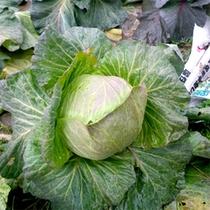 野菜は自家製無農薬野菜を使用!