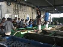 威勢のいい声が早朝から飛び交う柳漁港の競り市場