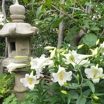 白く染まった「百合の花」