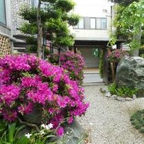 日本庭園 季節のお花【つつじ】