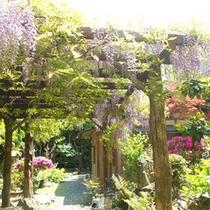 垂れ下がる薄紫が涼しげな「藤棚」